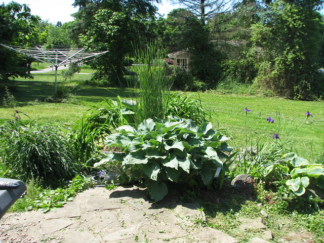 Pond View pre dig-up