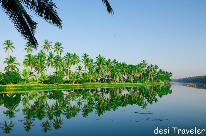 coconut trees backwaters vivanta by taj kovalam