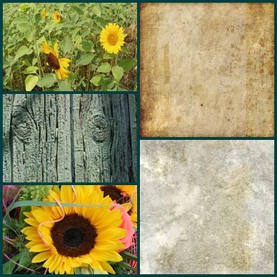 sunflower-page