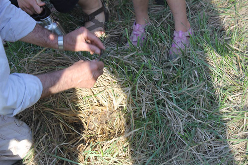 Earthworm castings in the pasture