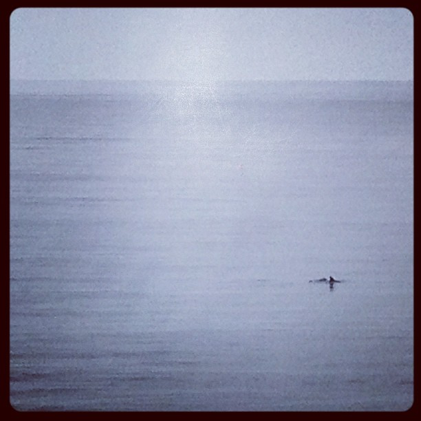 #dolphins spotted in the way to work #ocean #pch #caliphonia