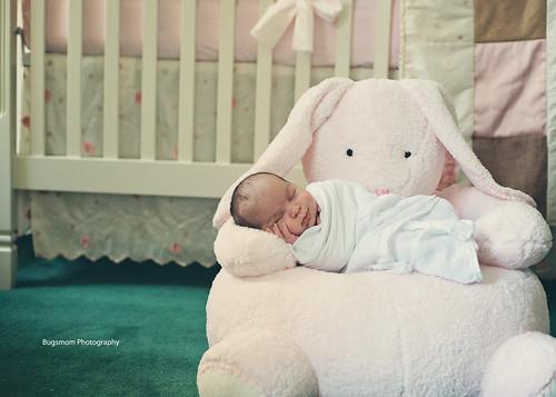 lila on a bunny