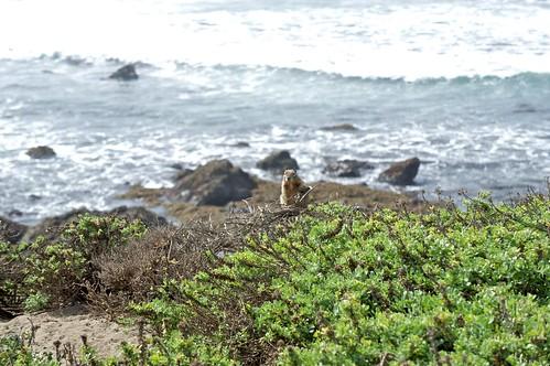 california 9