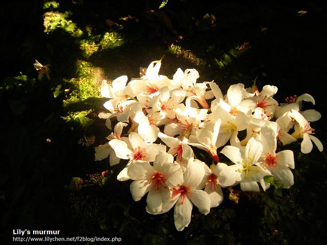 聚在一起的落花,在適合的地方拍照,陽光灑落,很美!
