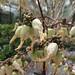 ProSpecieRara-Zierpflanzenmarkt Bern