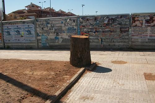 árbol talado cerca del camping municipal de Córdoba.