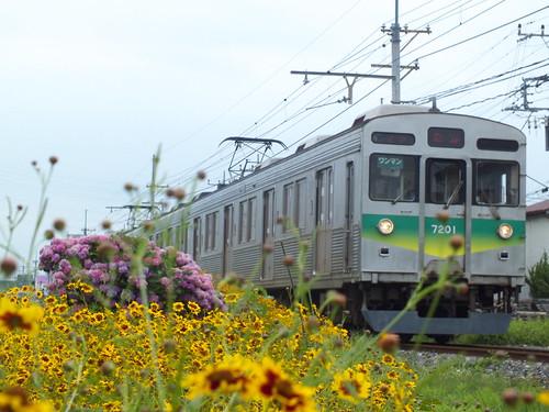7001Fと花