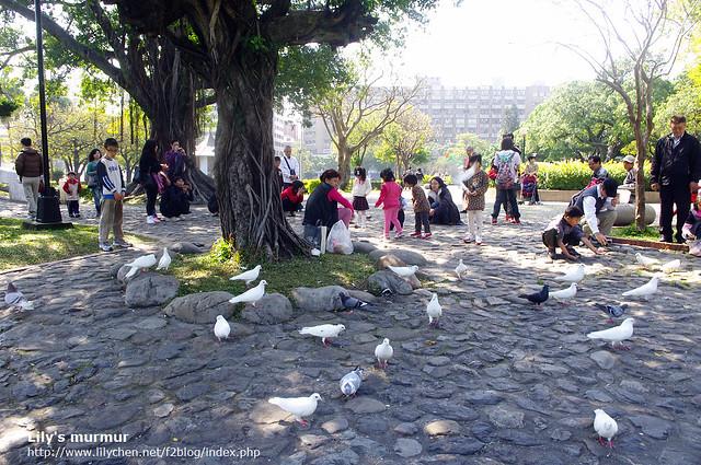 佔地很大的台中公園走起來很舒適,還可以餵鴿子。