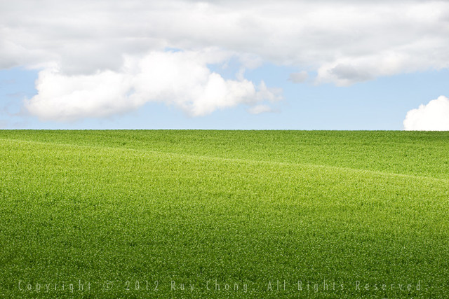 Pea Vines, The Palouse, 2012