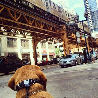 Hot Times...Buddy in   the City