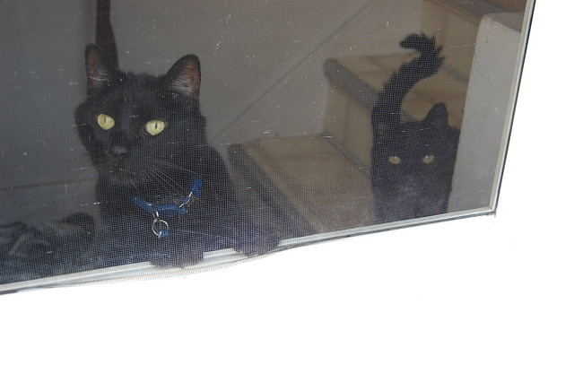 looking out the back door Mr. Puss Blue and Mr. Boots Red
