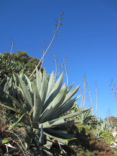 agave trail