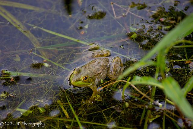 2012_Jul_06_Frog Pond_040