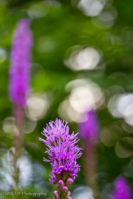 2012_Jul_10_Flowers_013