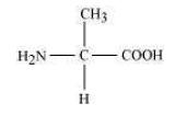 NCERT Solutions Class 11 Biology Chapter 9 Biomolecules