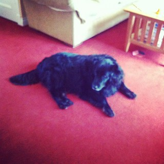 Day 19: animal. The lovely Jack. #photoadayjuly