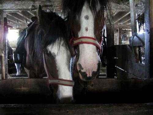 Horses at Pinto Valley Ranch