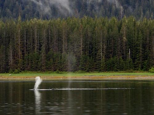 Whale- Juneau 2535u