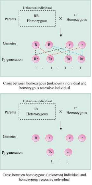 Principles of Inheritance and Variation chapter 5 biology