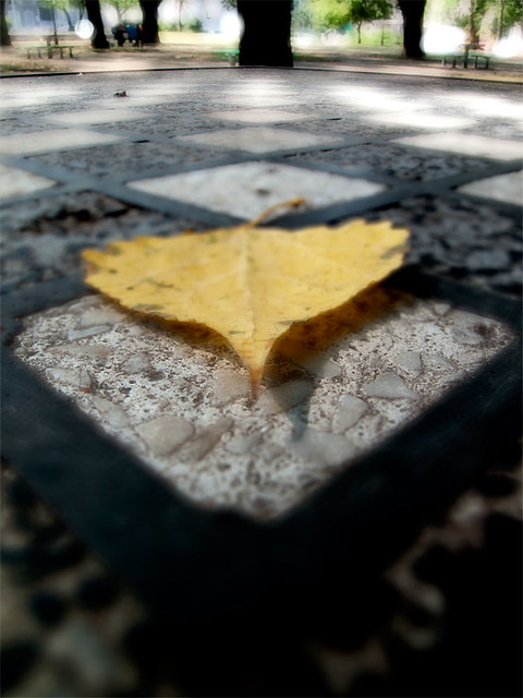dex-leaf-in-park