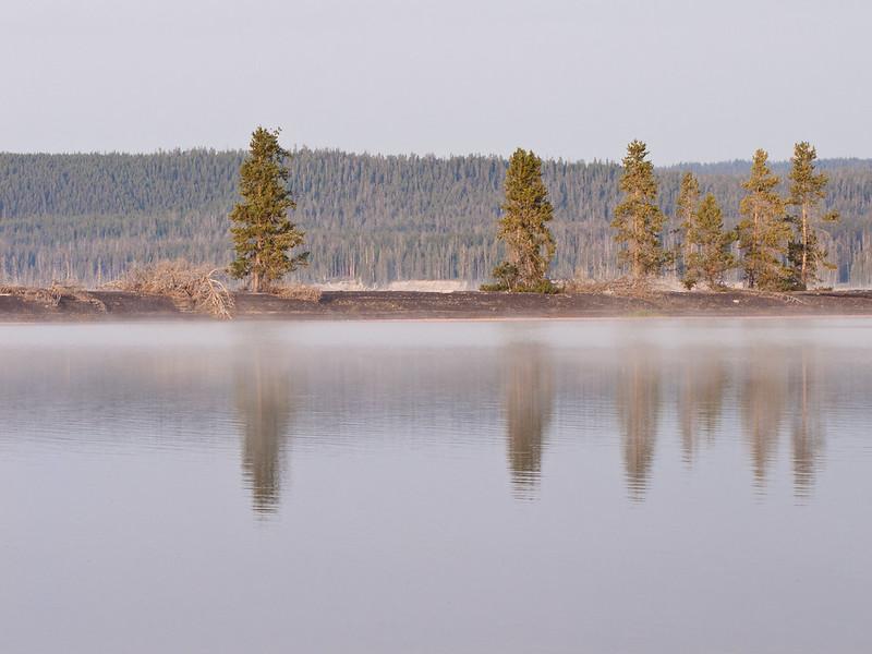 lodgepole tree reflection on Yellowstone Lake
