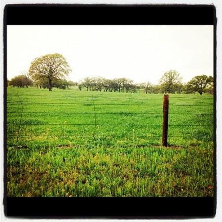 Texas Prairies #green #grass #spring #iphonetx #wildflowers