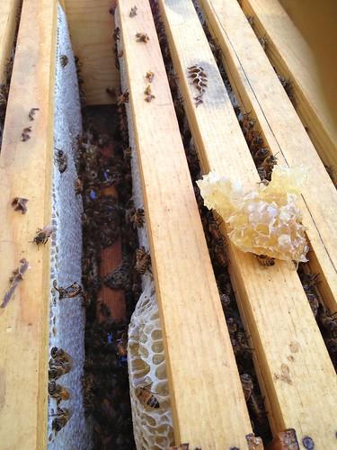 Gorgeous capped over frames of honey