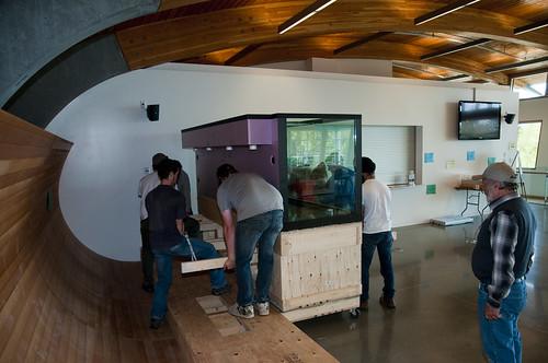 Display Aquarium Arrival 11 - coming off cart