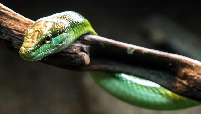 Reptilparken #04