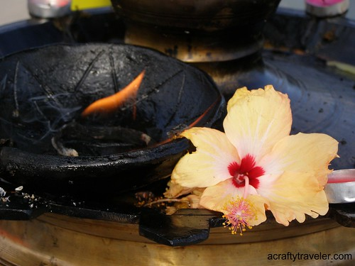 Hibiscus flower at Sri Siva Subramaniya temple - Nadi, Fiji