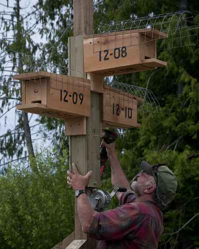 Bruce Cousins mounting Purple Martin boxes