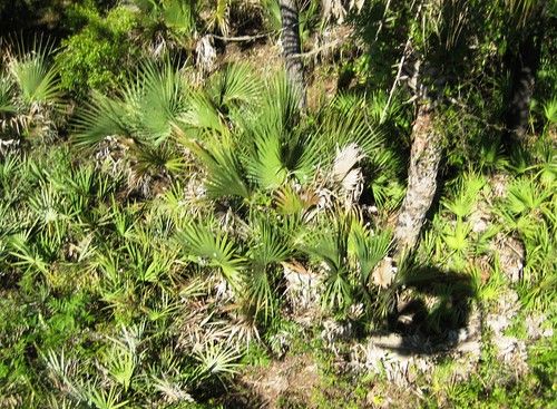 Me and My Shadow, Up in the Treetops on the Cypress Canopy Cycle, Florida EcoSafaris, St. Cloud, Fla.