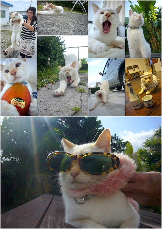 Okinawa 沖繩 2012 相關-010