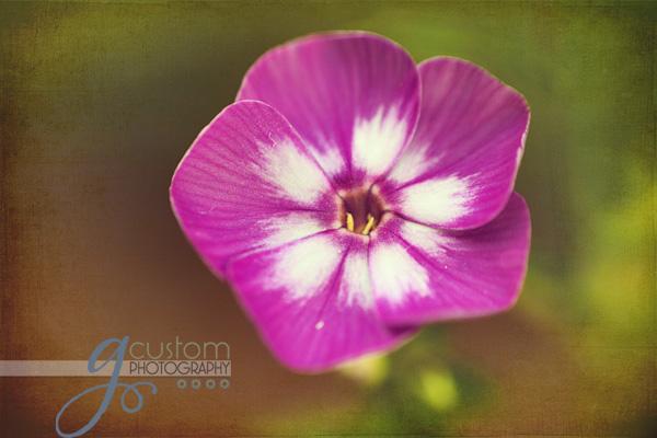 30 - floral 9 texture