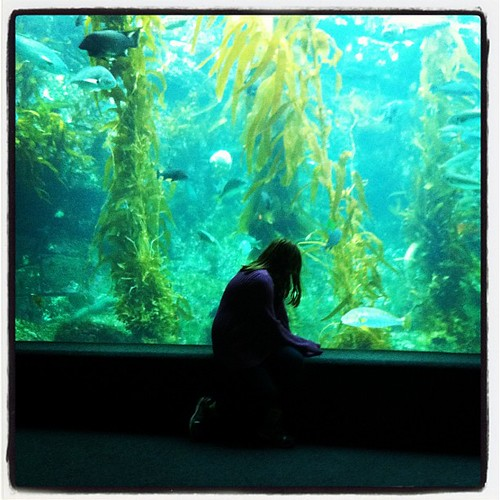 Margie and the kelp forest.