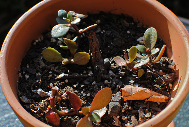 [172/366] New Growth?