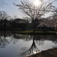 【Photo】SAKURA2012!【YOYOGI】