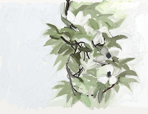 "Dogwood in ArtRage ""oils"" by jmignault"