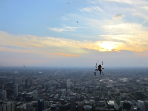 a giant spider descends on chicago