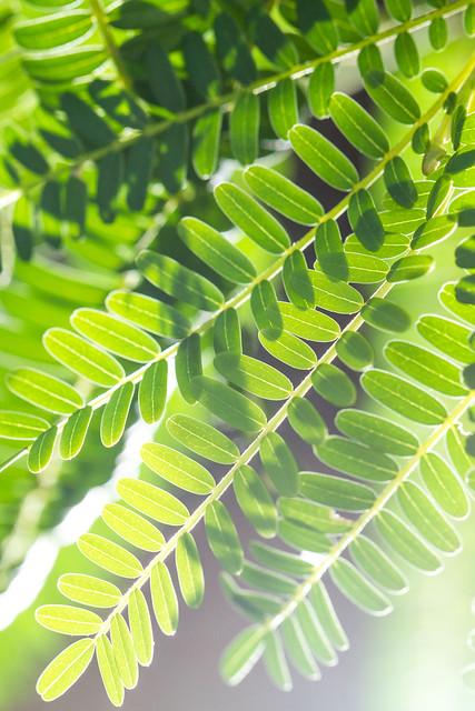 Botanisk hage #03