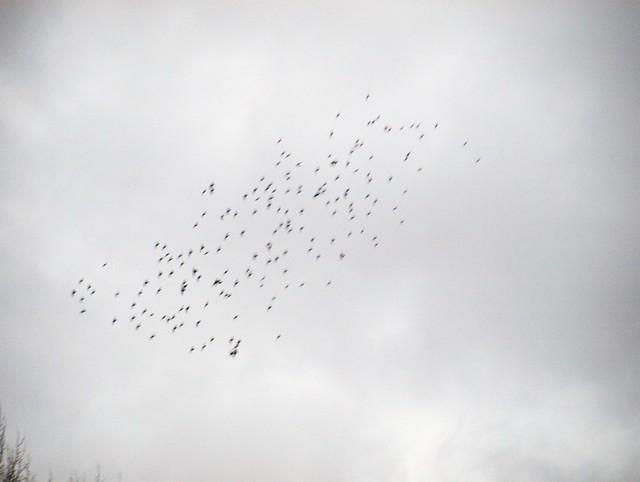 Vogeltanz (7)