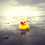 I want to be a real duck
