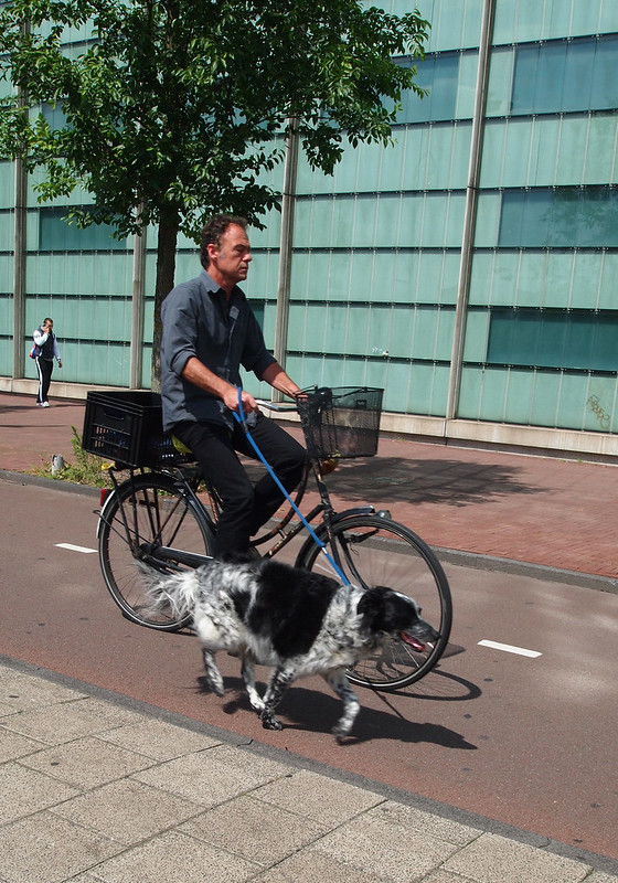 Dog running beside its cycling boss