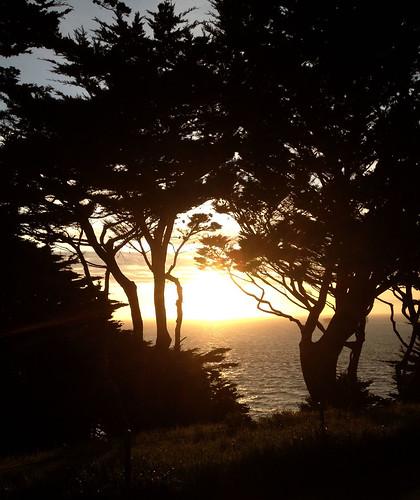 sunset-trees.jpg