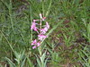 Pretty Wildflowers Near North Fork Lake Creek