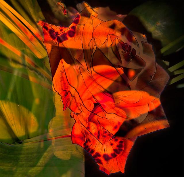 flower-montage