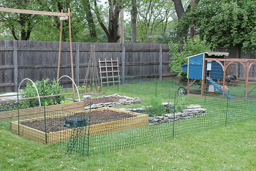 20120429. We put up a fence to keep the chicken out of the garden.