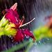 rain 034