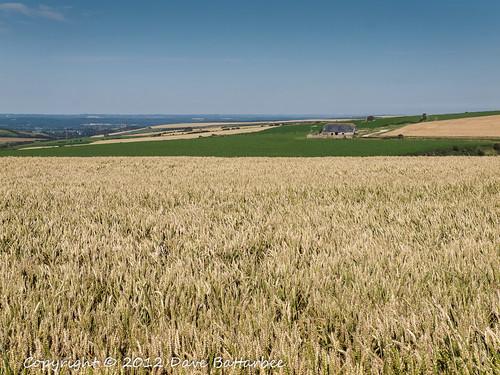 Dorset Fields