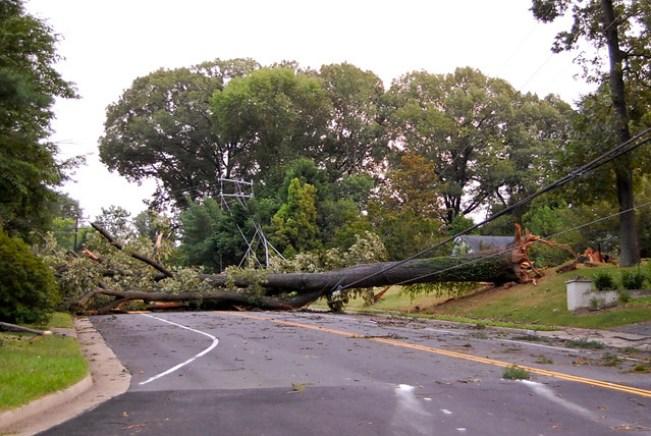 Tree down.
